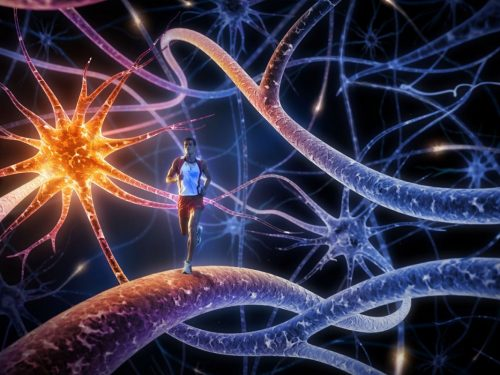 I Neuroni e le Cellule Gliali