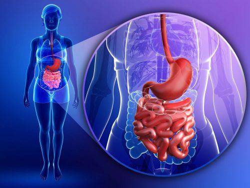 Morbo di Crohn: fra le cause funghi e batteri