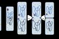 Biologia | La divisione cellulare dei procarioti