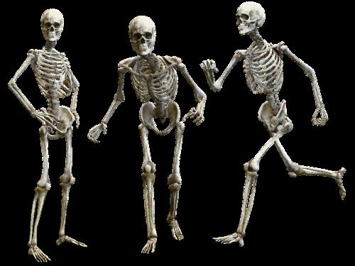 Anatomia | Descrizione delle ossa lunghe, brevi e piatte